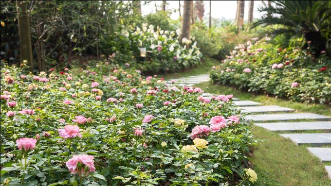 Biệt thự hoa hồng nằm duyên dáng bên hồ Đại Lải