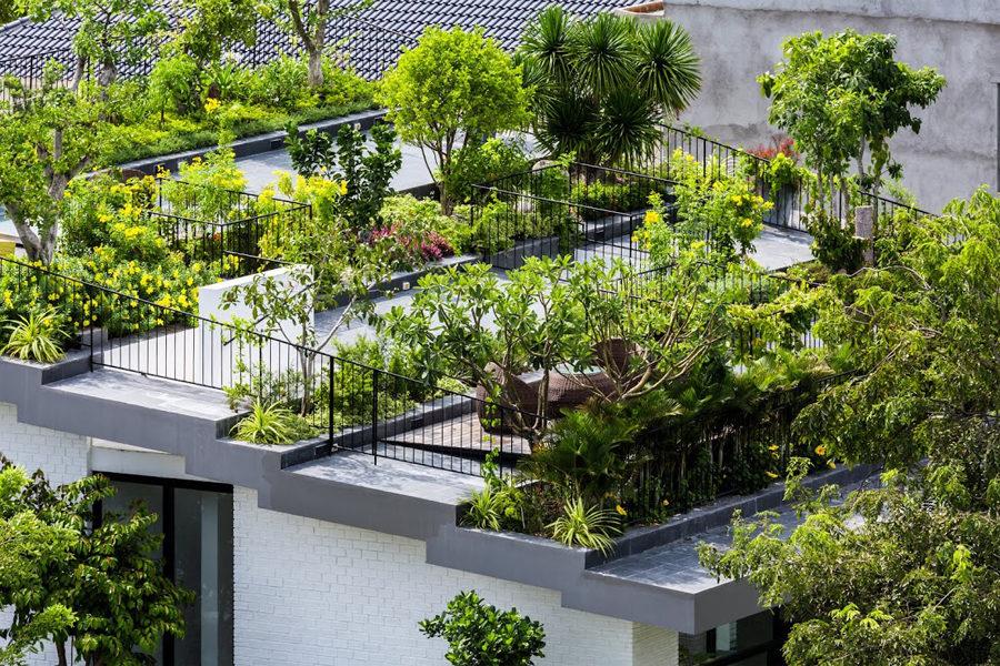 Thiết kế vườn trên sân thượng cho biệt thự ở Nha Trang - 03