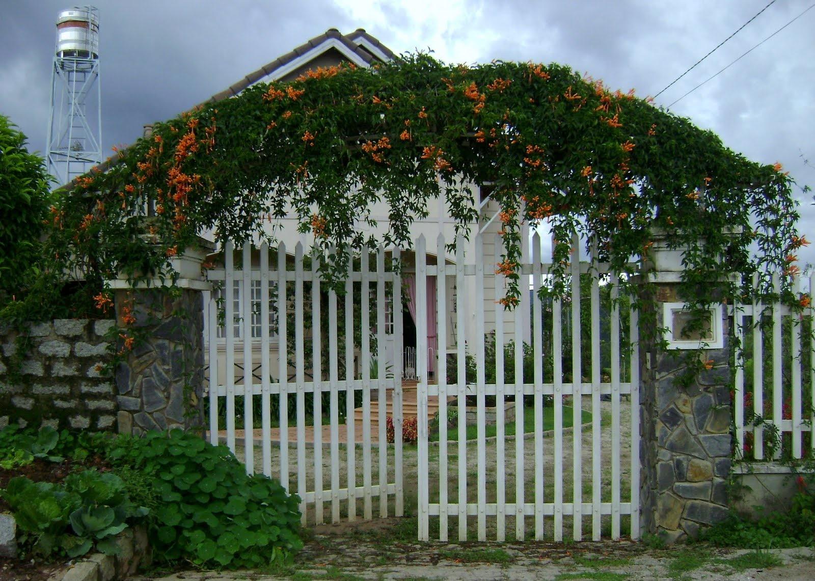 Bạn nên thường xuyên chặt tỉa cây cối xung quanh cổng để giúp cổng luôn sáng sủa, rộng rãi